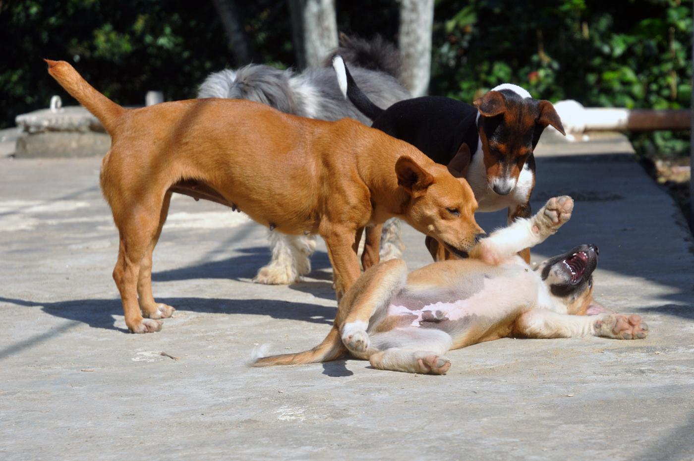 Zahlreiche Hunde und Katzen laufen frei durch die Gässchen der Favela und toben oder dösen in der Sonne. (Bild: Andreas Lerg)